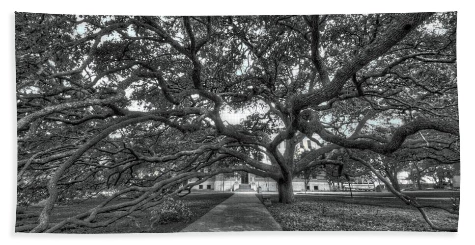 Century Tree Beach Towel featuring the photograph Under The Century Tree - Black And White by David Morefield