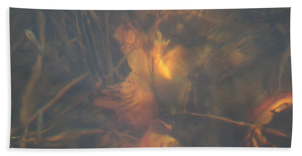 Waterlily Lake Water Fish Minnow Plants Lakebed Nature Wild Beach Towel featuring the photograph Under Waterlily by Andrea Lawrence