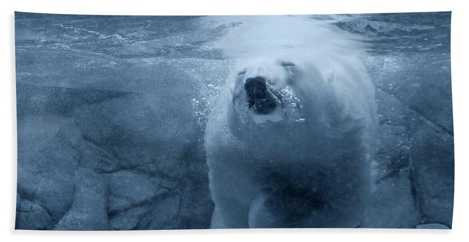 Polar Bear Beach Towel featuring the photograph Underwater Playground by Douglas Barnard