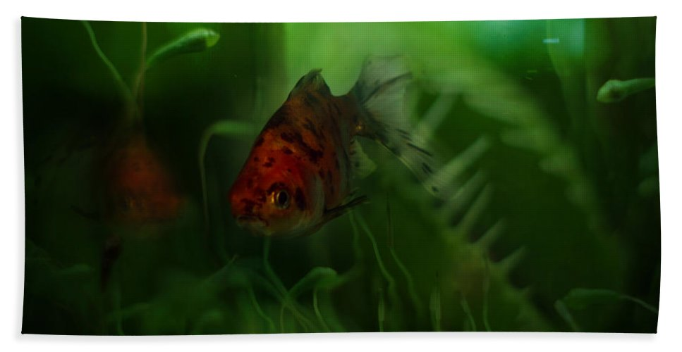 Goldfish Beach Towel featuring the photograph Underwater World by Angel Ciesniarska
