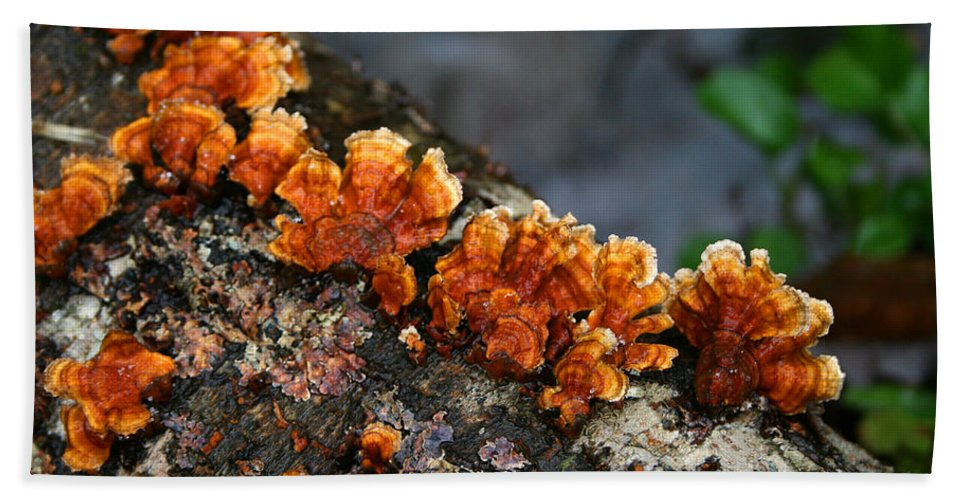 Bright Orange Nature Wet Forest Fungus Tree Wood Closeup Macro Beach Sheet featuring the photograph Unexpected Brightness by Andrei Shliakhau