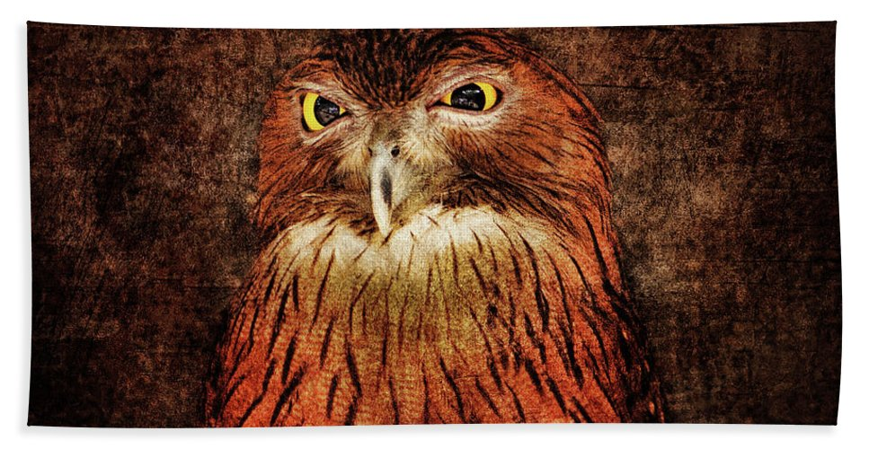 Owl Beach Towel featuring the photograph Unimpressed by Andrew Paranavitana