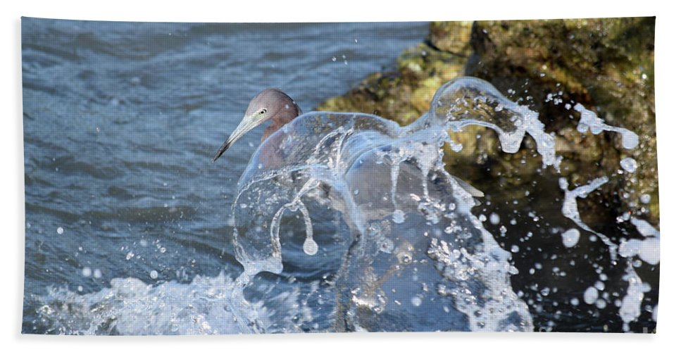 Little Blue Heron Beach Towel featuring the photograph Unwavering by William Tasker
