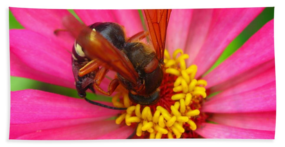 Bee Beach Towel featuring the photograph Up Close And Personal by Brittany Horton