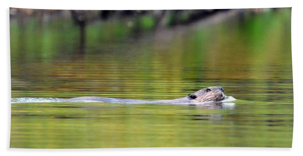 Beaver Beach Towel featuring the photograph Up For Air by Glenn Gordon