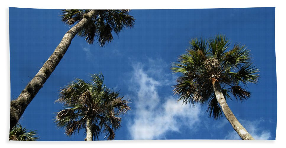 Photography Beach Towel featuring the photograph Up To The Sky Palms by Susanne Van Hulst