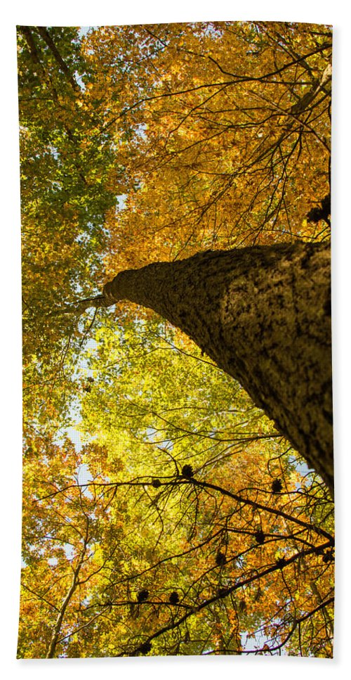 Trees Beach Towel featuring the photograph Up To The Top by Edie Ann Mendenhall