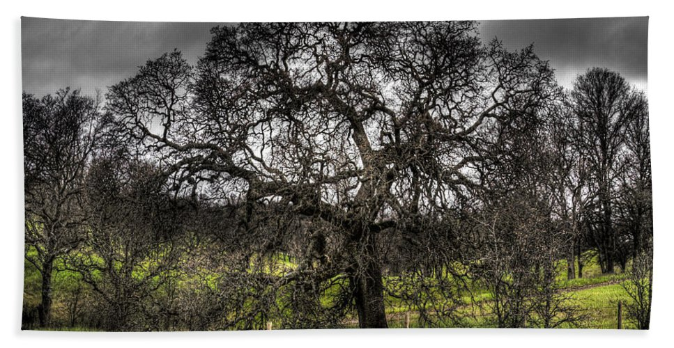 Landscape Beach Towel featuring the photograph Valley Oak by Lee Santa
