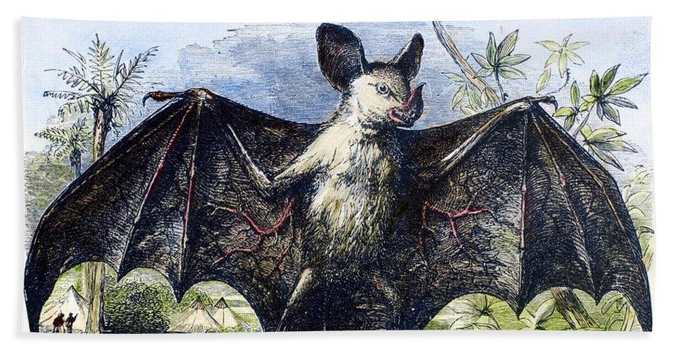 19th Century Beach Towel featuring the photograph Vampire Bat by Granger