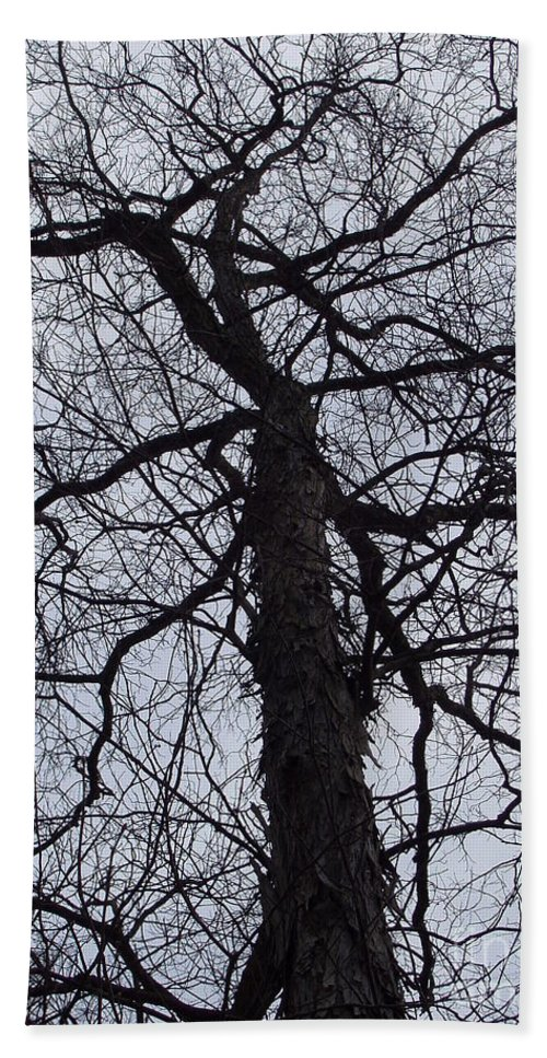 Hickory Beach Towel featuring the photograph Veins And Vessels by Deborah Crew-Johnson