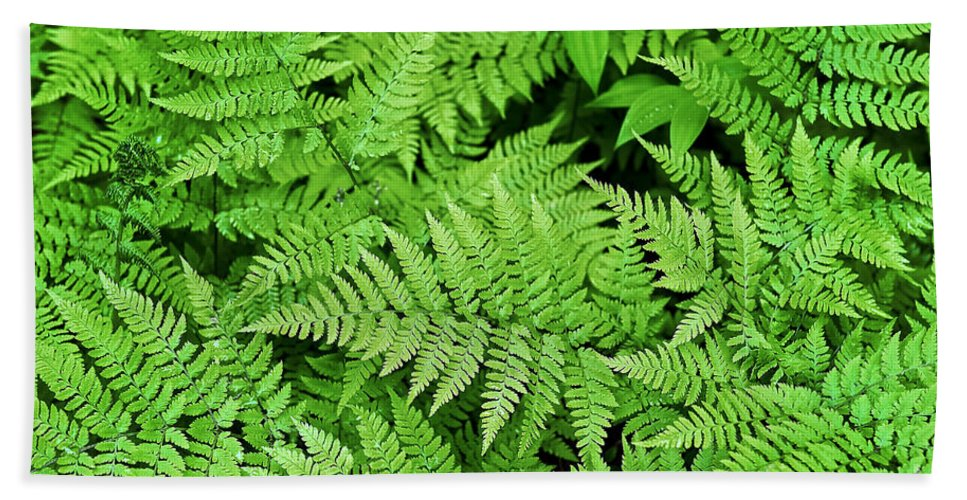 Alaska Beach Towel featuring the photograph Verdant Ferns by John Greim