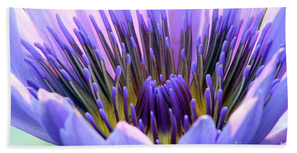 Lily Pad Beach Towel featuring the photograph Vibrant by Alycia Christine