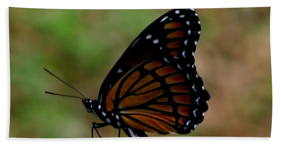 Butterfly Beach Towel featuring the photograph Viceroy Butterfly by Donna Brown