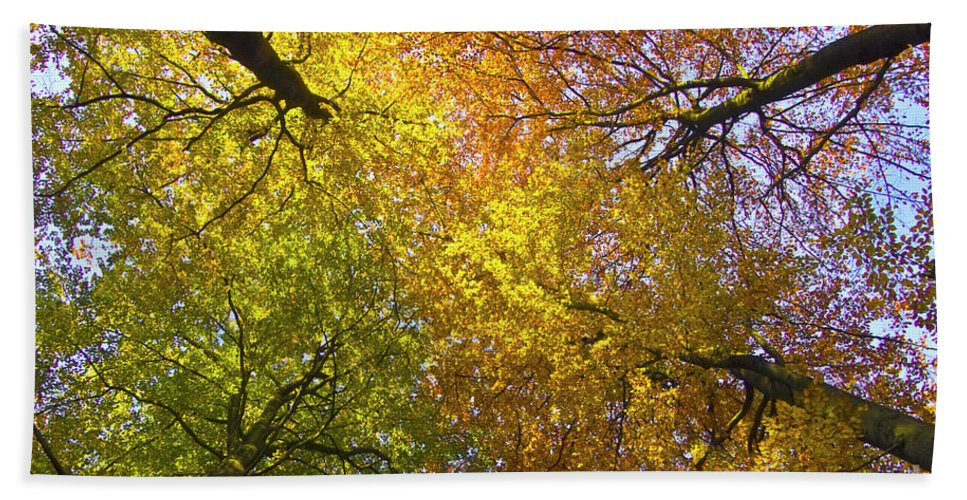 Trees Beach Towel featuring the photograph View To The Top Of Beech Trees by Heiko Koehrer-Wagner