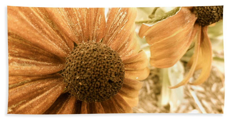 Flowers Beach Towel featuring the photograph Vintage Black Eyed Susan by Trish Hale