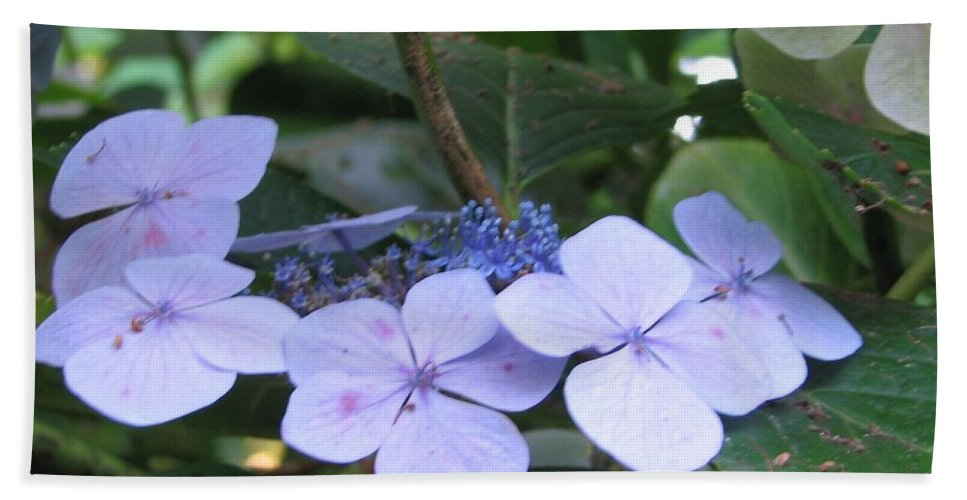 Violets Beach Towel featuring the photograph Violets O The Green by Kelly Mezzapelle