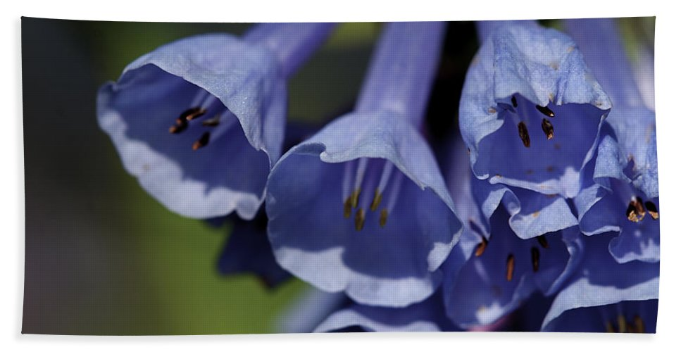 Background Beach Towel featuring the photograph Virginia Bluebells by Jack R Perry
