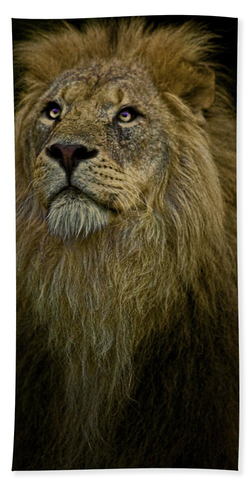 Lion Beach Towel featuring the photograph Waiting Expectantly by Chris Lord