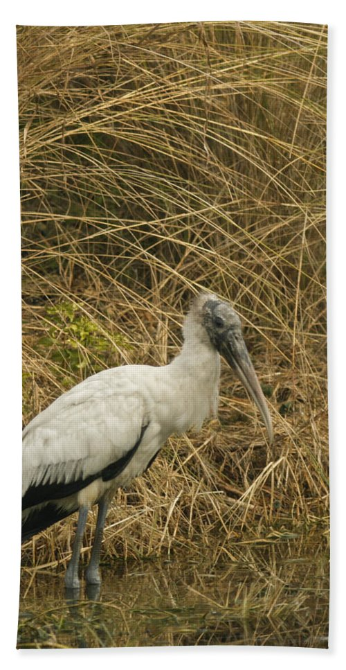 Bird Beach Towel featuring the photograph Waiting by Phill Doherty