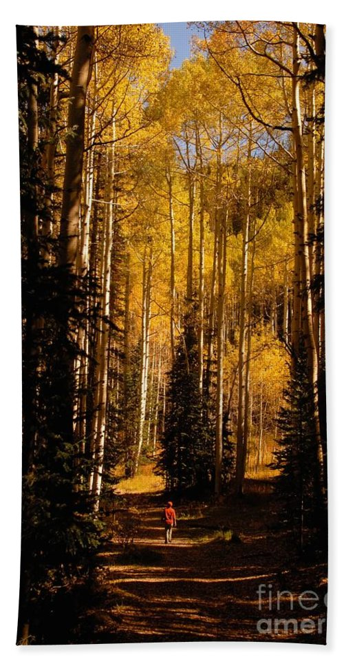 Landscape Beach Sheet featuring the photograph Walking With Aspens by David Lee Thompson