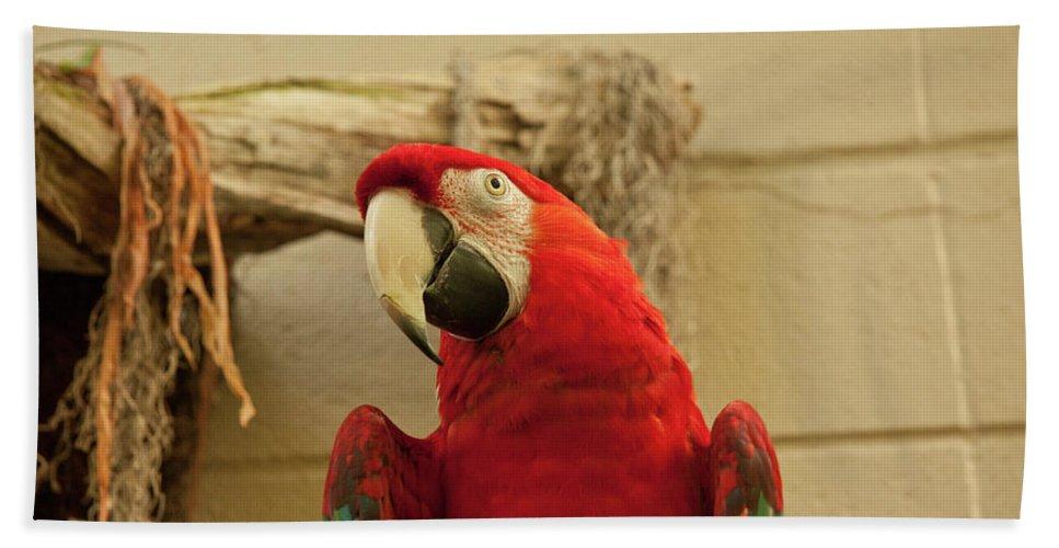 Parrot Beach Towel featuring the photograph Wanna Cracker by Deanna Paull