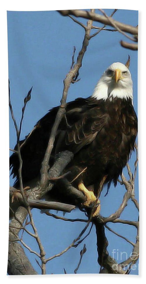 Eagle Beach Towel featuring the photograph Watch On The Fox by Tommy Anderson