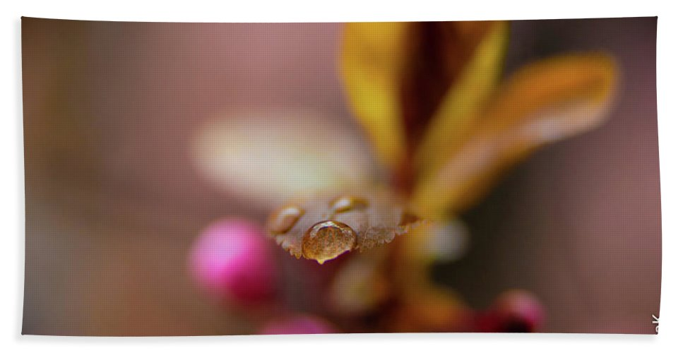 Flowers Beach Towel featuring the photograph Water Drop by Fabio Ferreira