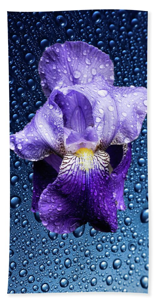 Blue Beach Towel featuring the photograph Water Drops On Purple Iris by Hans Schrodter