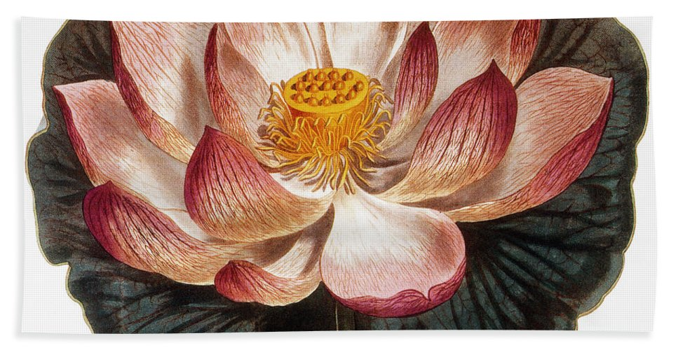 1806 Beach Towel featuring the photograph Water Lily, 1806 by Granger