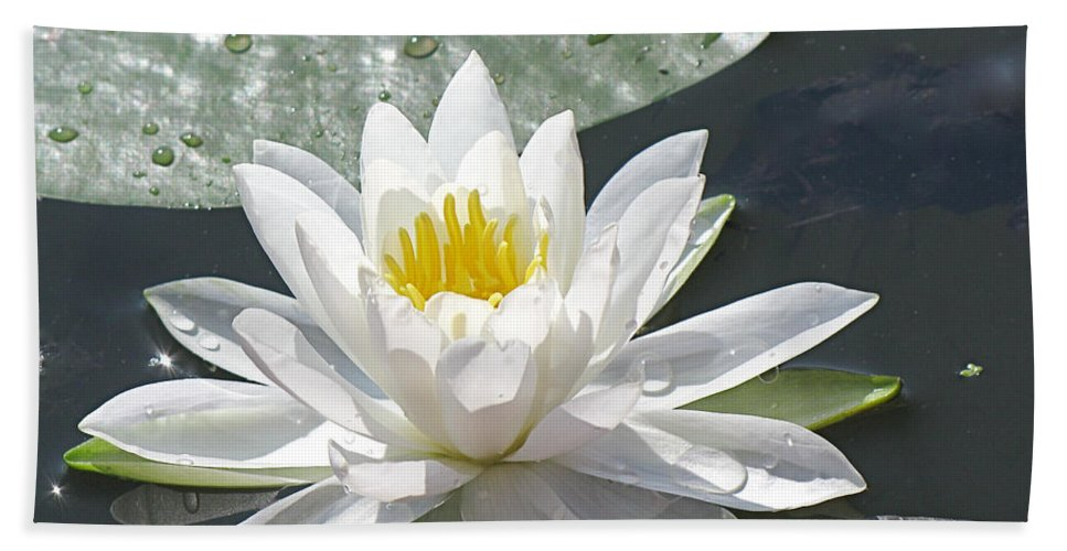 Background Beach Towel featuring the photograph Water Lily by Jack R Perry