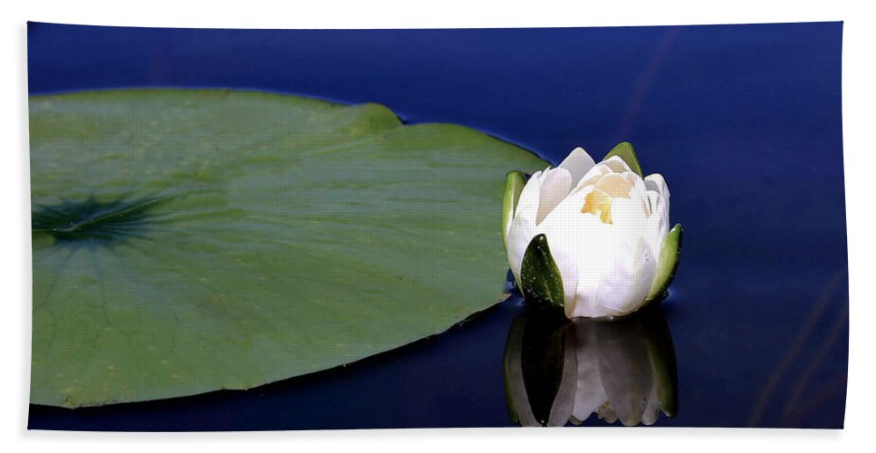 Water Lily Beach Towel featuring the photograph Water Lily by Kristin Elmquist