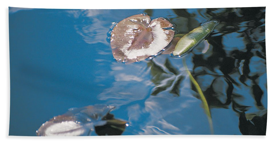 Australia Beach Towel featuring the photograph Water Lily Leaves And Reflection Of Clouds In Unknown Lake by Australian School