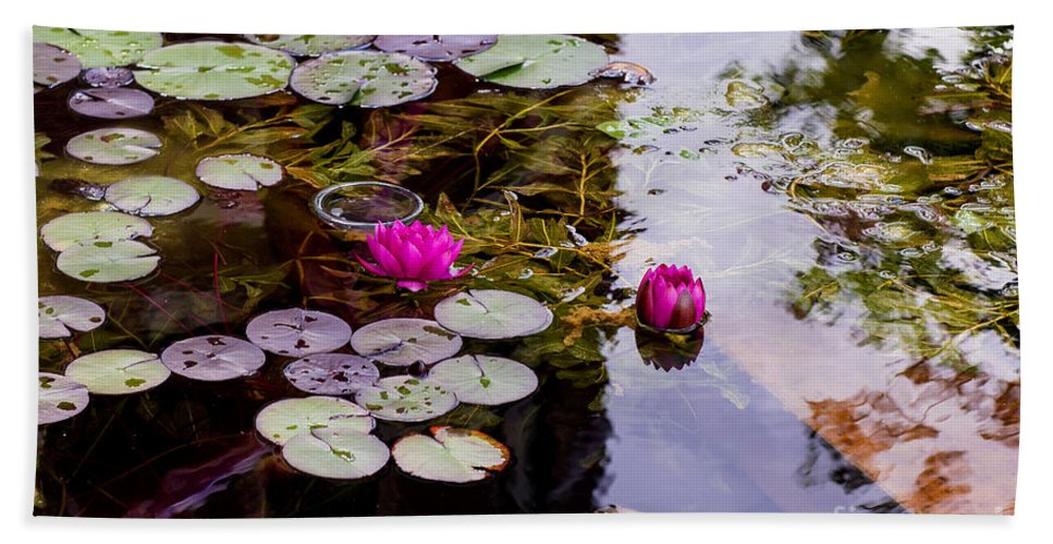Water Lily Near Rijksmuseum Museum In Amsterdam Beach Towel featuring the photograph Water Lily Near Rijksmuseum Museum by Yefim Bam