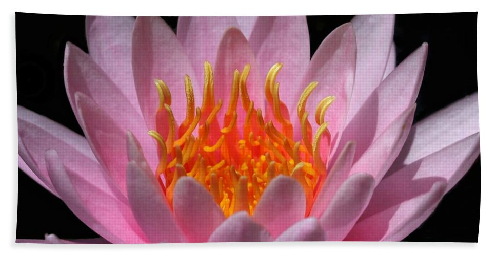 Water Lily Beach Towel featuring the photograph Water Lily On Fire by Sabrina L Ryan