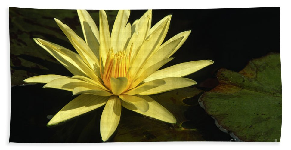 Flowers Beach Towel featuring the photograph Water Lily by Sandra Bronstein