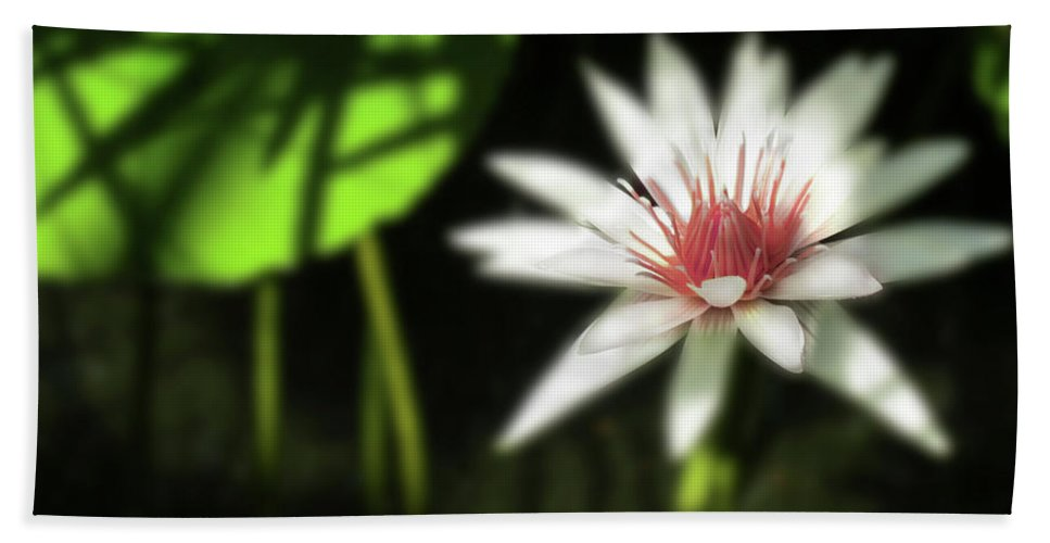Water Beach Towel featuring the photograph Water Lily by Shelley Neff