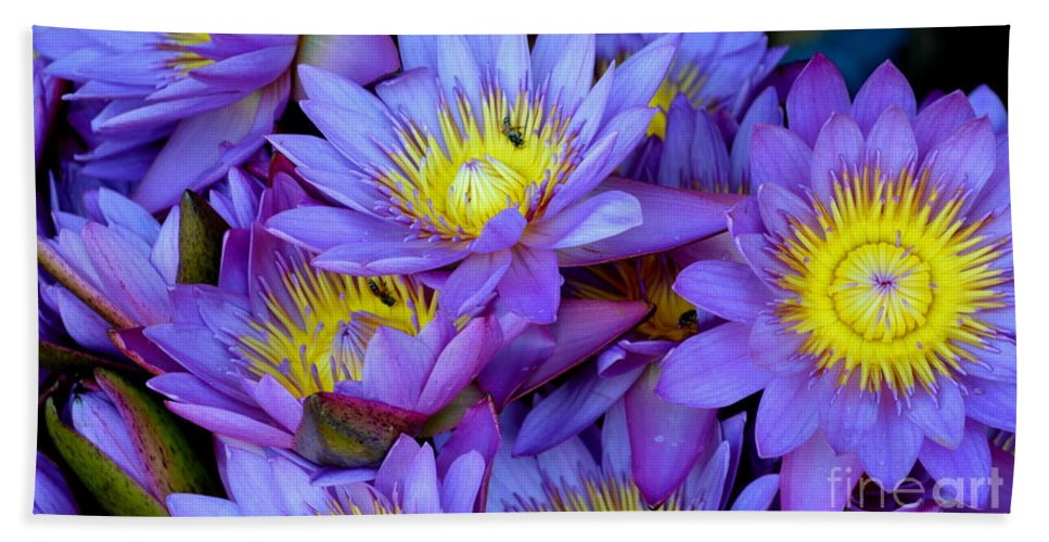 Water Lily Beach Towel featuring the photograph Water Lily by Suranga Basnagala