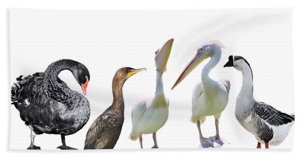 Bird Beach Towel featuring the digital art Waterbirds by Svetlana Foote