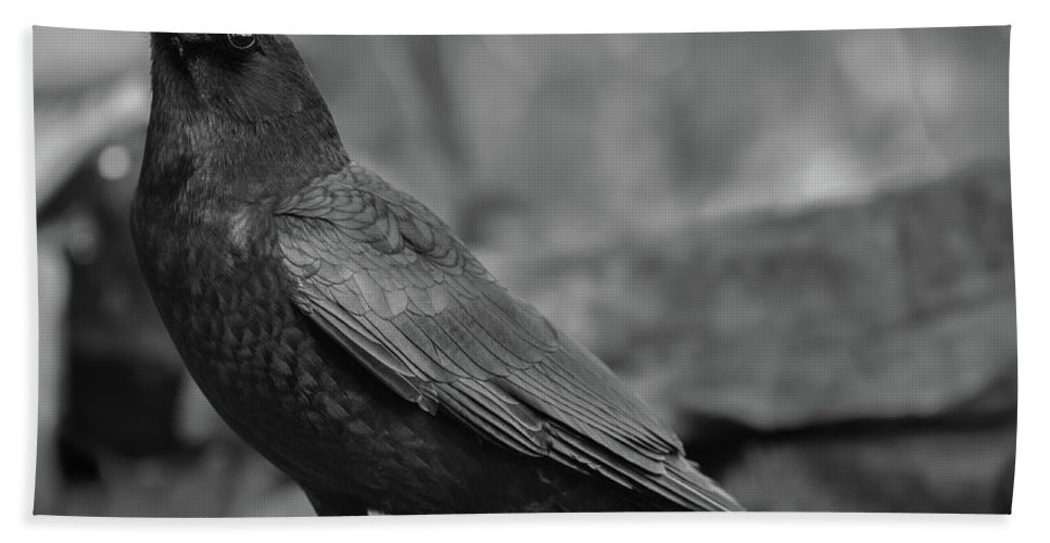 Crow - Rae Ann M. Garrett - Black And White Photography - Images Of Crows - Corvids- Mother Crow- For People Who Love Crows - Crow Lovers - International Known Artist - Professional Artists- Beach Towel featuring the photograph Waterfall by Rae Ann M Garrett