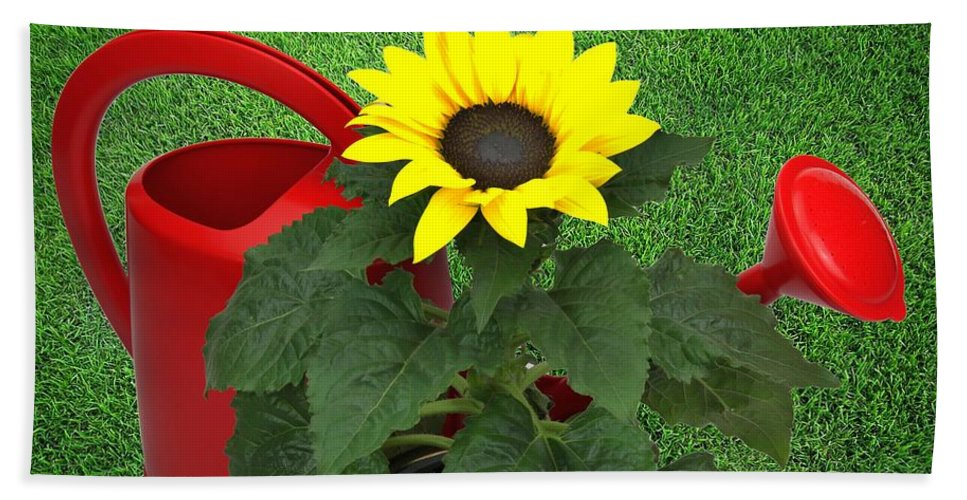 Sunflower Beach Towel featuring the photograph Watering With Sunflower by Manfred Lutzius