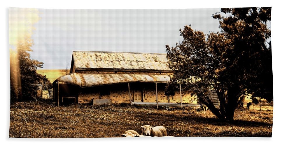 Sheep Beach Towel featuring the photograph We Live Here.... by Douglas Barnard