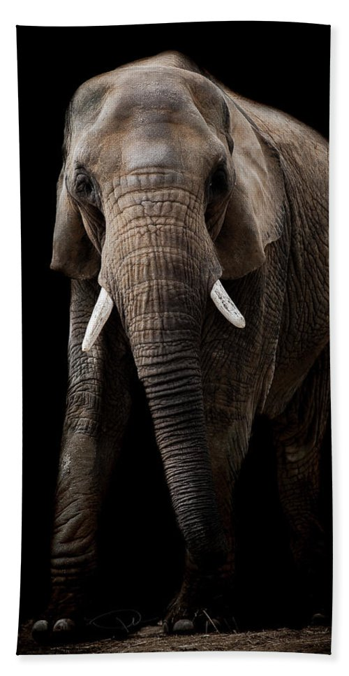 Elephant Beach Towel featuring the photograph We Shall Never Forget by Paul Neville