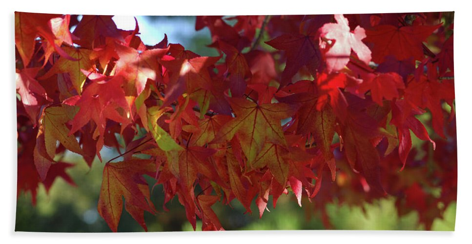 Red Leaves Beach Towel featuring the photograph Wearing Red For Fall by Donna Blackhall