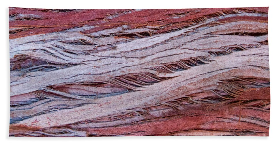 Tree Bark Beach Towel featuring the photograph Weaver's Art by Marilyn Cornwell