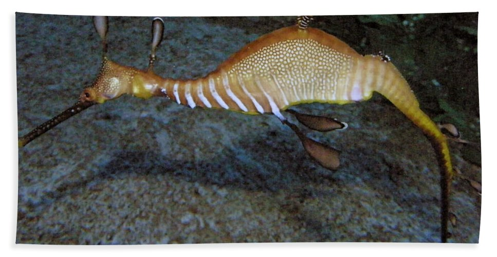 Sea Dragon Beach Towel featuring the photograph Weedy Sea Dragon by Kimberly Mohlenhoff