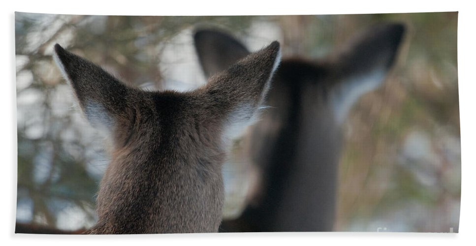 Deer Beach Towel featuring the photograph We're All Ears by Sandra Bronstein
