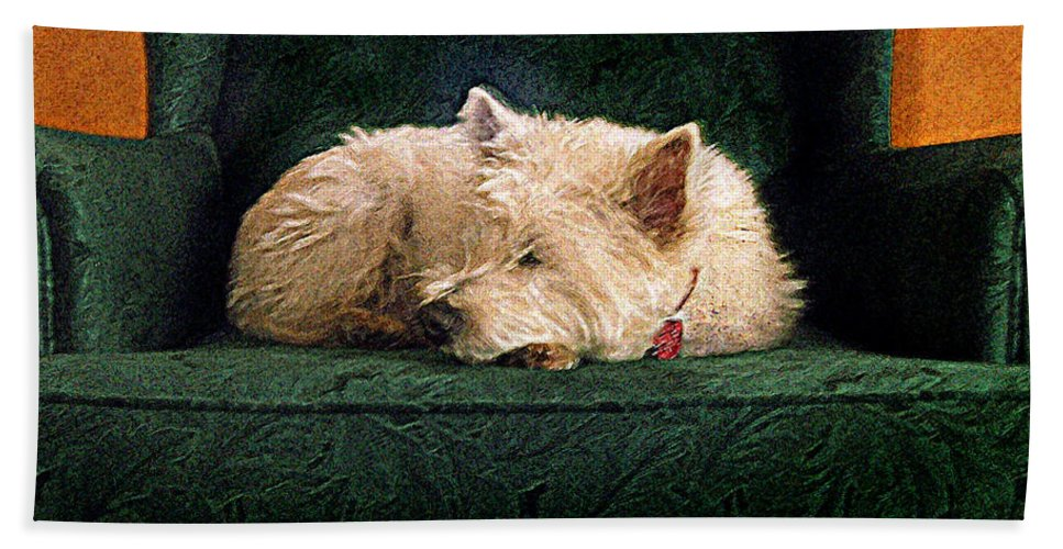 Westie Beach Towel featuring the photograph Westie Nap by Ed A Gage