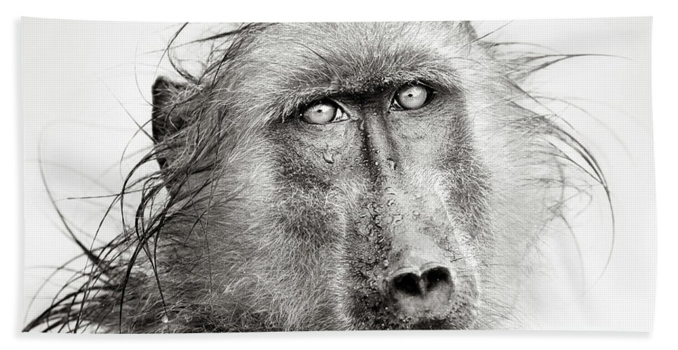 Baboon Beach Towel featuring the photograph Wet Baboon Portrait by Johan Swanepoel