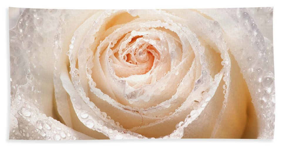 Rose Beach Towel featuring the photograph Wet White Rose by Don Johnson