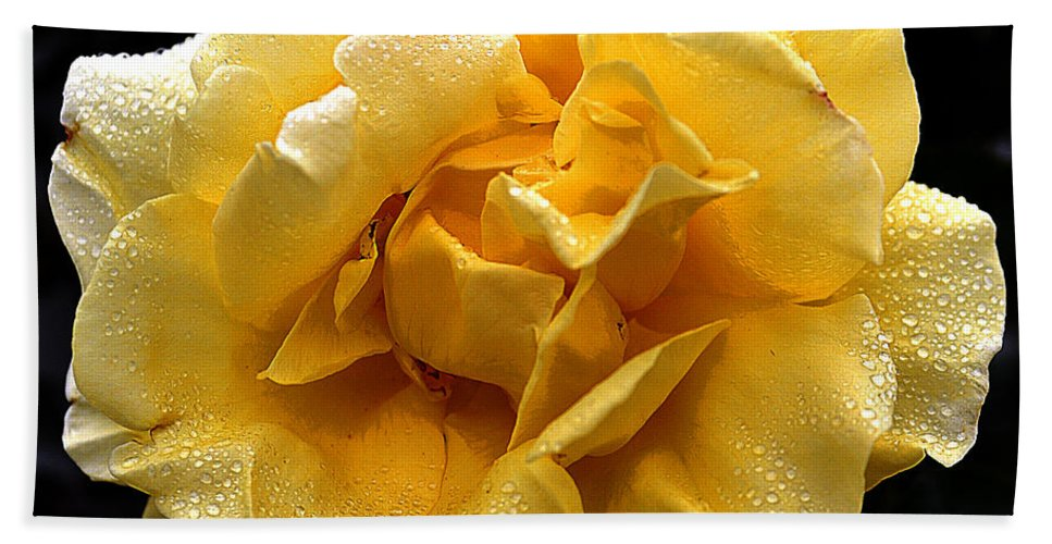 Clay Beach Towel featuring the photograph Wet Yellow Rose II by Clayton Bruster